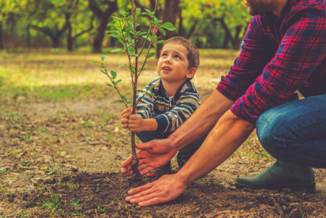 Young child planting a tree with father